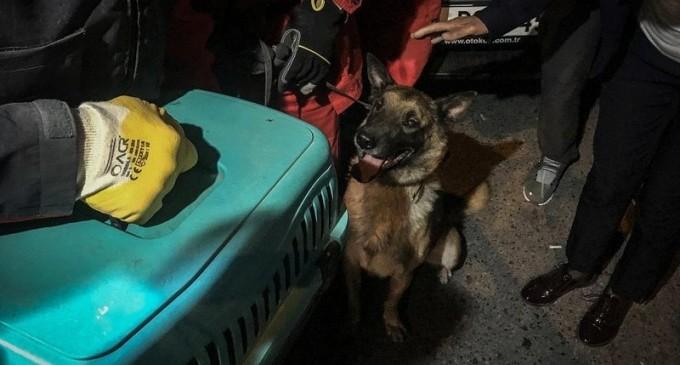 FOTO O pisică a fost salvată de un câine dintre ruinele unei clădiri prăbușite în Izmir – Esential