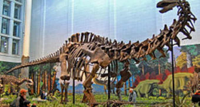 De ce unii dinozauri aveau gâturi atât de lungi – Arheologie