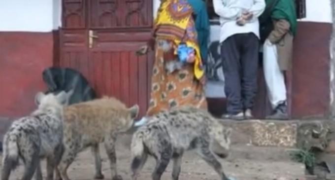 Zimbabwe: Hienele l-au târât pe un bărbat din pat în afara casei și l-au ucis – International