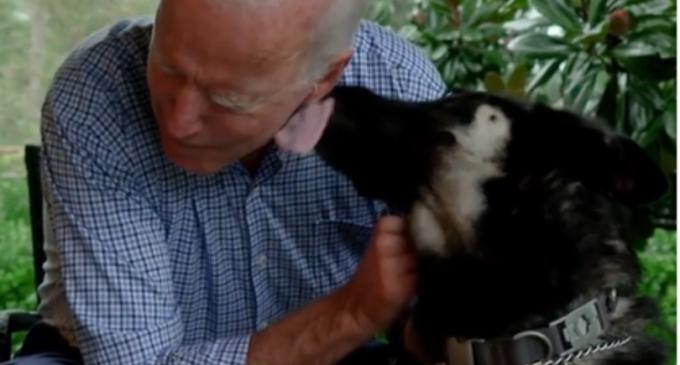 VIDEO Câinii se întorc la Casa Albă: Ciobănescul german al lui Biden va fi primul câine de salvare care va ajunge în reședința președintelui SUA – Showbiz