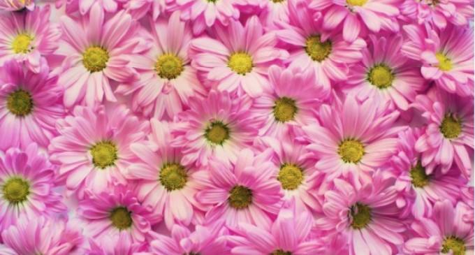 Lucruri pe care trebuie să le știe un bărbat înainte de a dărui flori