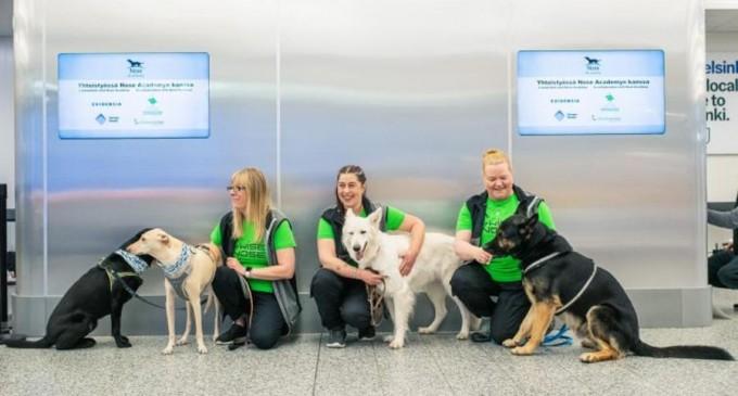 Șase câini antrenați special vor putea depista persoanele infectate cu virusul SARS-CoV-2 – Coronavirus