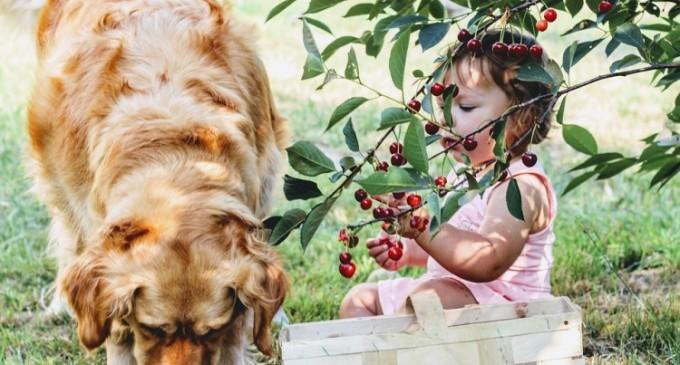 Alimentația potrivită pentru perioada gestației la câini