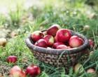 Zeama bordeleza la pomi fructiferi – toate informatiile necesare pentru o livada sanatoasa