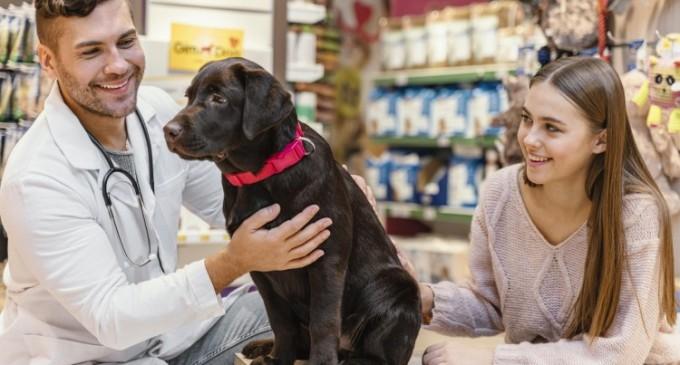 Animalele de companie şi importanța controlului anual la medicul veterinar