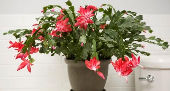 5 plante de apartament usor de crescut intr-un spatiu mic